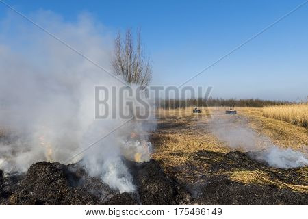 Cane or reed cultivation and burning of the cane near Giethoorn and Kalenberg in wintertime in National Park Weerribben-Wieden Netherlands.