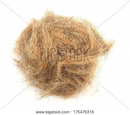 Ball Of Dog Hair Close-up