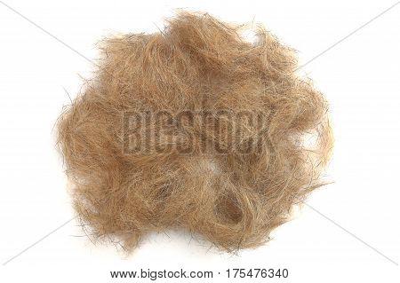 Dog Hair Isolated On White Background