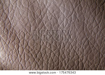 Crocodile Skin Closeup