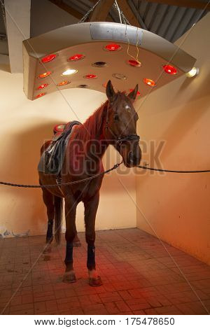 Thoroughbred stallion enjoy equine solarium on animal farm rural scene