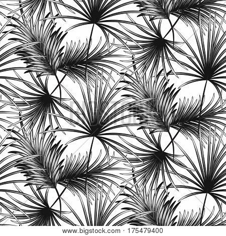 Grayscale palm leaves seamless vector pattern on white texture. Tropical jungle nature leaf.