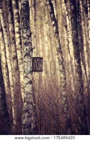 Spring birch forest with handmade wooden nesting box for birds hanging on a tree. Animal protection ecology concept with copy space