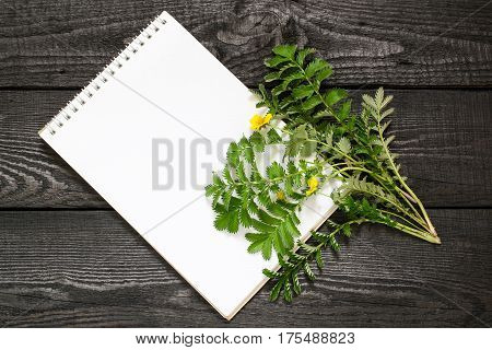 Medicinal plant Silverweed (Potentilla anserine or Argentina anserina) and notebook to write recipes and methods of application. Used in herbal medicine bee plant