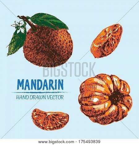 Digital vector detailed color orange mandarin hand drawn retro illustration collection set. Thin artistic linear pencil outline. Vintage ink flat style engraved simple doodle sketches.