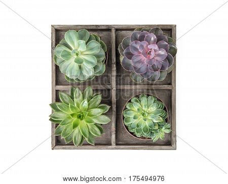 Succulent plants on white background. Minimal floral flat lay