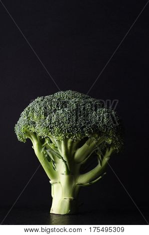 A head of broccoli tree shaped and standing upright on black surface against black background. Dark moody lighting.