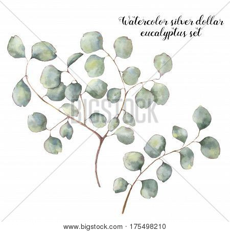Watercolor silver dollar eucalyptus set. Hand painted floral illustration with round leaves and branches isolated on white background. For design, print and fabric.