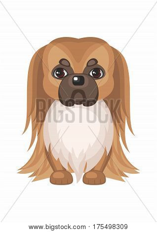 Pekingese . Vector image of a cute purebred dogs in cartoon style.