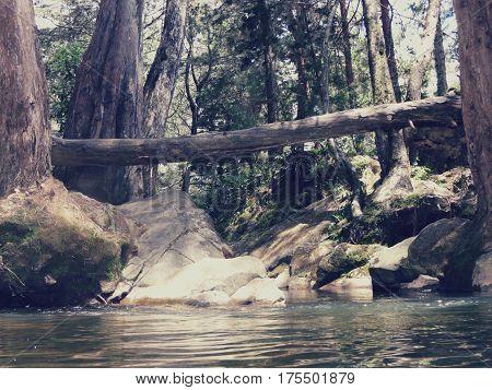 rio, agua, paisaje, tronco, bosque, piedras, tronco caido