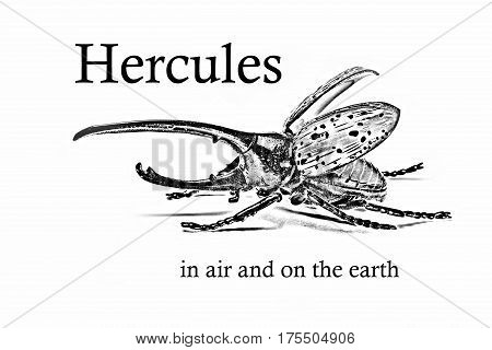 Beetle and signature Hercules in air and on the earth