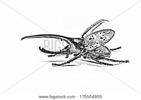 Photo processed under the pencil drawing of the beetle Hercules