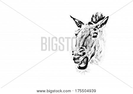 Photo of a horse head stylized under a pencil