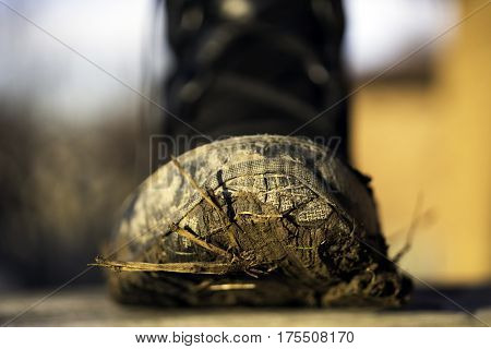 Closeup of andvenurers tough outdoor boot covered with mud grass and sticks on the bottom outdoor activity concept