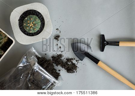 Top View Of Growing Cactus, Growing Equipment And Soil In Cold Tone