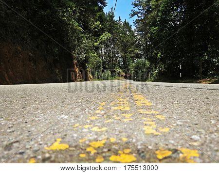 calle, carretera, camino, via, paisaje, arboles, bosque en carretera