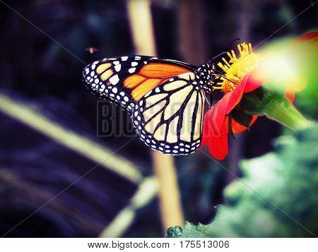 mariposa, hd, alta definicion, colores, flor, naturaleza