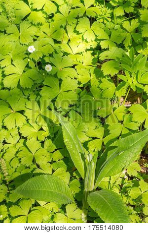 Green Leaves Background Of Marsh Grass In Light And Shadow