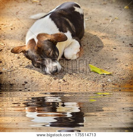 Stray dog laying on the ground with reflect in water