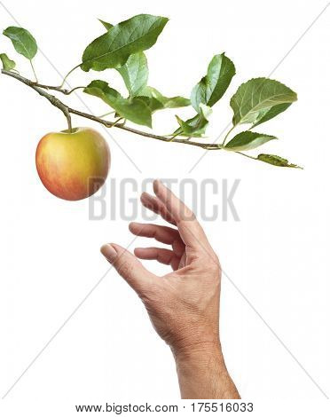 Picking an apple. Male hand is reaching for an apple. Isolated on white background