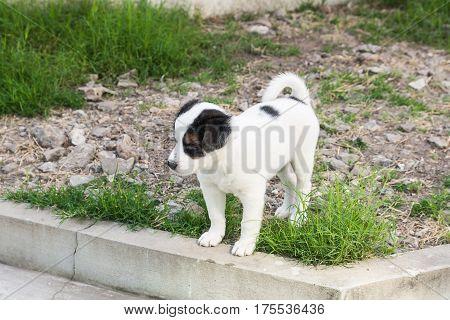 Cute Little Dog In The Garden