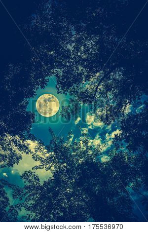 Silhouette the branches of trees against night sky with full moon on tranquil nature. Beautiful landscape with large moon outdoors at nighttime. Cross process. The moon were NOT furnished by NASA.