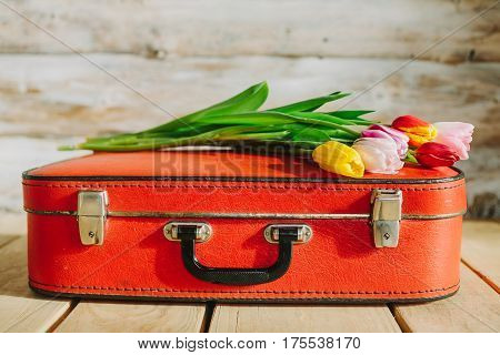 tulips in red suitcase. woden background .