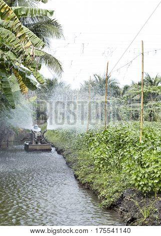 Vegetable Garden Plant Vegetable Basil, Nature, Basil,