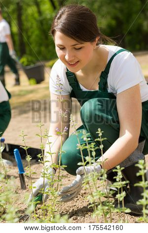 Female Gardener Placing New Plants
