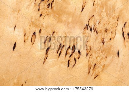 Wood Pattern Of Karelian Birch, Close-up