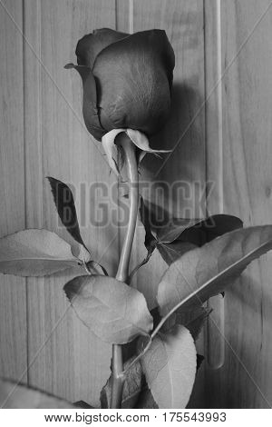 black and white photography roses vintage background