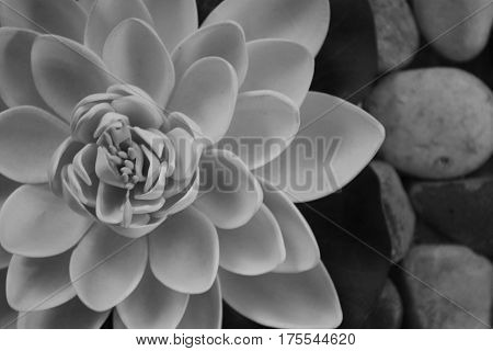 black-and-white photograph of a Lotus flower , natural texture of the flower