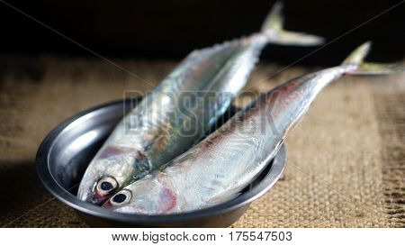 Indian mackerel fish. Species of mackerel family, commonly found in the Indian and West Pacific oceans, and their surrounding seas. They are important food fish and used in Asian cuisine.