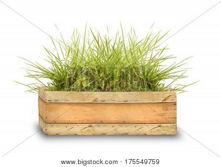 wooden box with green grass with blank space for text isolated on white background