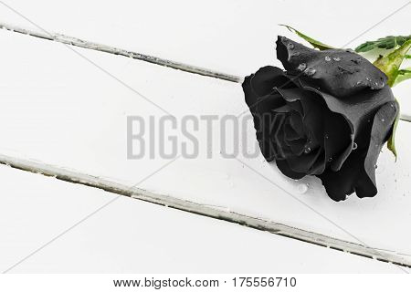 Black rose with water drops on white wood