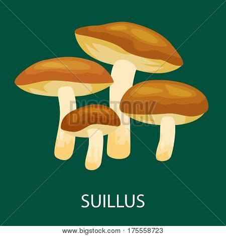 Edible mushroom Suillus luteus isolated, Wild Foraged Mushroom, Vector isolated edible natural mushrooms in nature set, organic vegetable food collection