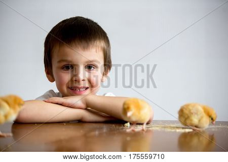 Cute Sweet Little Child, Preschool Boy, Playing With Little Chicks At Home