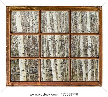 aspen grove in late winter or early spring in Rocky Mountains, Colorado, as seen through vintage sash window