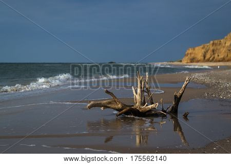 Driftwood on sea beach. Waves on background. Dark stormy sky