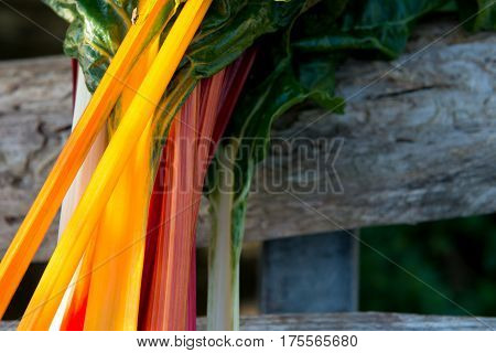 Orange, Red, And White Swiss Chard Stems With Copy Space