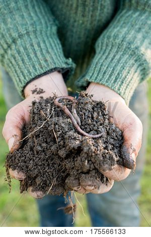 Hands With Pile Of Compost With Earthworm On Top