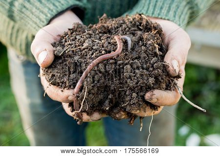 Earthworm On Mound Of Dirt On Hands
