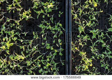 Overhead Of Seedlings In Seedling Boxes