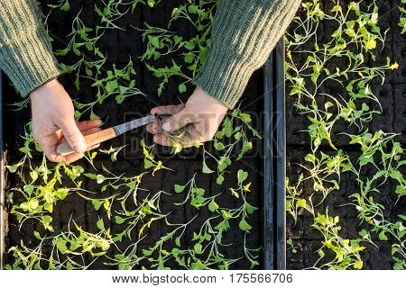Handling A Seedling With Seedling Boxes In The Background