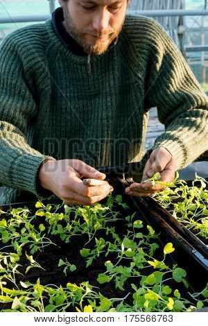 Man holding a seedling over seedling boxes in a plant nursery