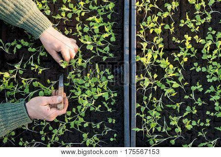 Overhead Of Hands Planting Seedling In Seedling Box