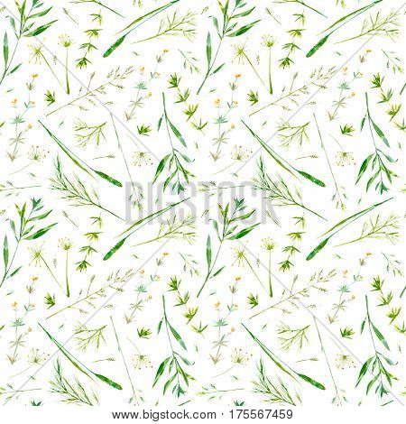 Floral seamless pattern of a meadow herbs and flowers.  Spike and timothy grass. Watercolor hand drawn illustration.
