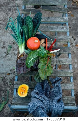 Variety Of Freshly-picked Vegetables
