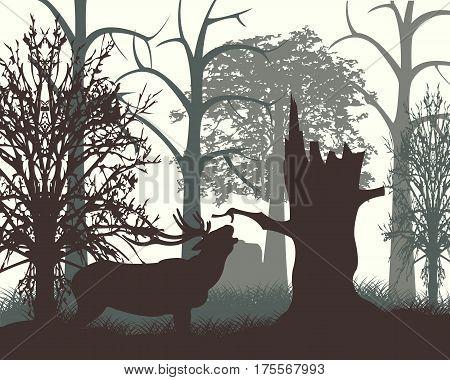 Wood in matutinal mist and animal deer