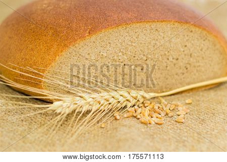 Partly incised round loaf of the hearth bread made of a wheat and rye flour wheat ear and wheat grain closeup on a the sackcloth